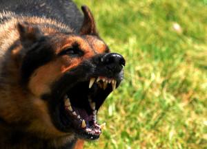Кинофобия - боязнь собак