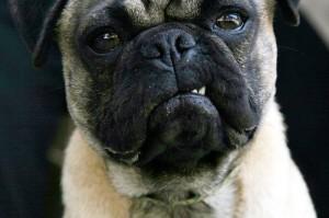 Страх собак - лечение